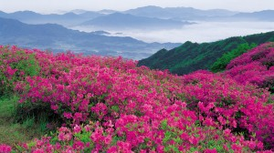Flowers-Pink-In-The-Mountain-Wallpaper